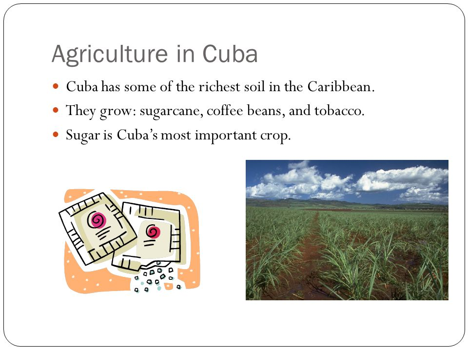 Agriculture in Cuba Cuba has some of the richest soil in the Caribbean. They grow: sugarcane, coffee beans, and tobacco.