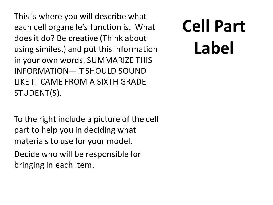 This is where you will describe what each cell organelle's function is