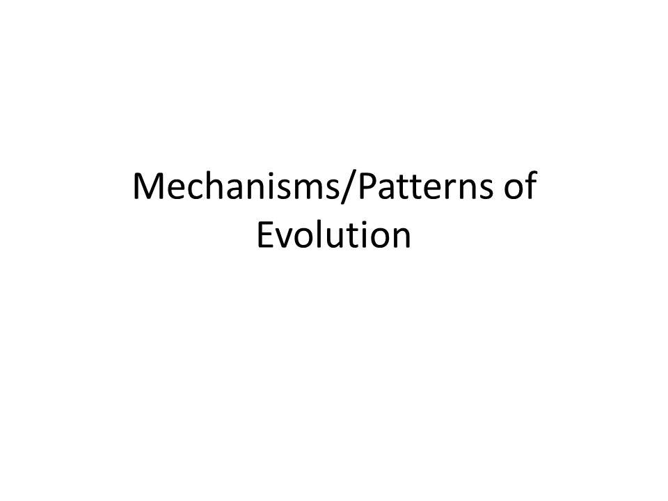 Mechanisms/Patterns of Evolution