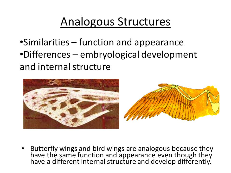 Analogous Structures Similarities – function and appearance