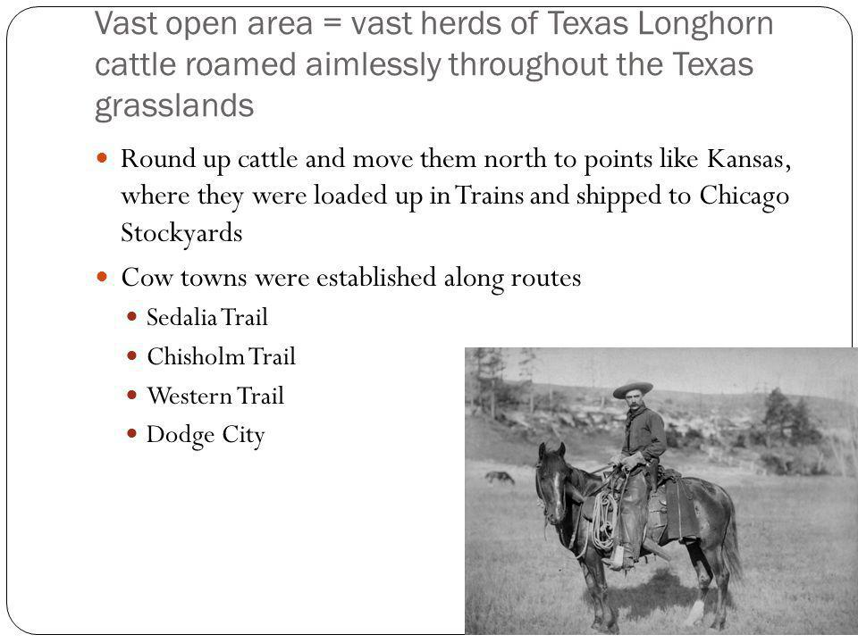 Vast open area = vast herds of Texas Longhorn cattle roamed aimlessly throughout the Texas grasslands