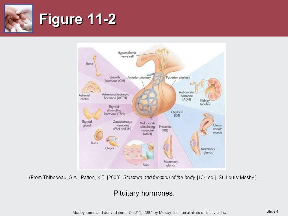Figure 11-2 Pituitary hormones.