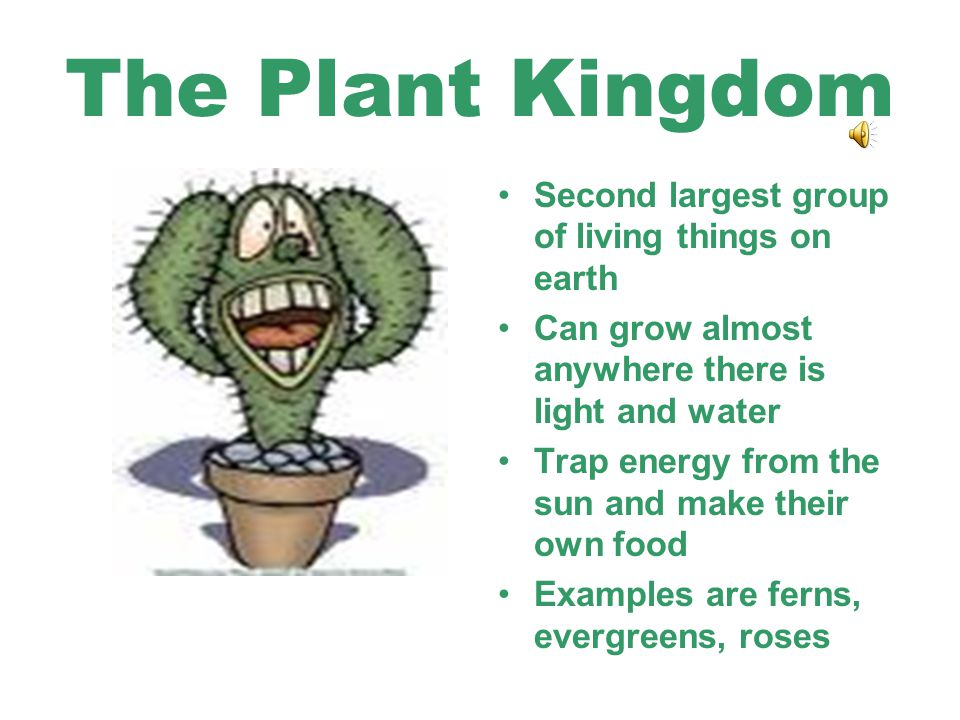 The Plant Kingdom Second largest group of living things on earth