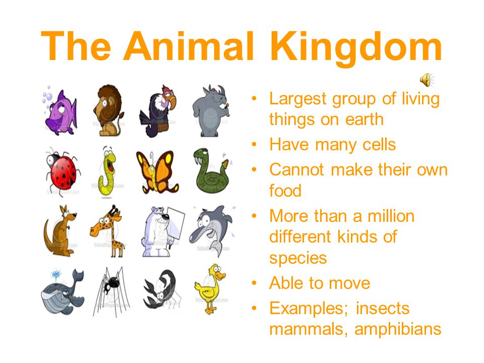 The Animal Kingdom Largest group of living things on earth