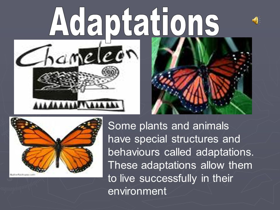 Adaptations Some plants and animals have special structures and