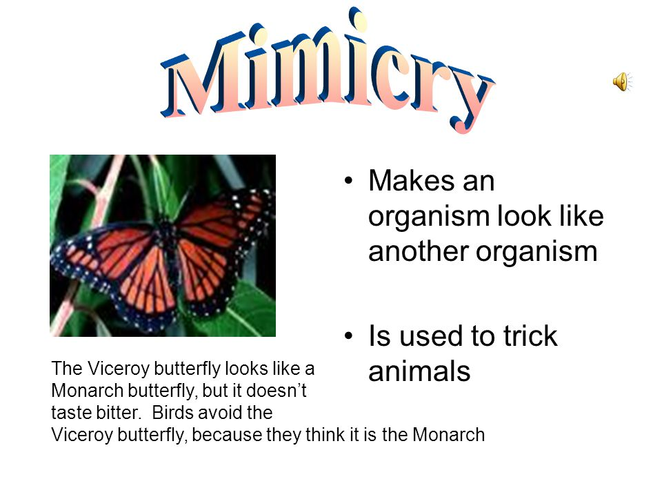 Mimicry Makes an organism look like another organism