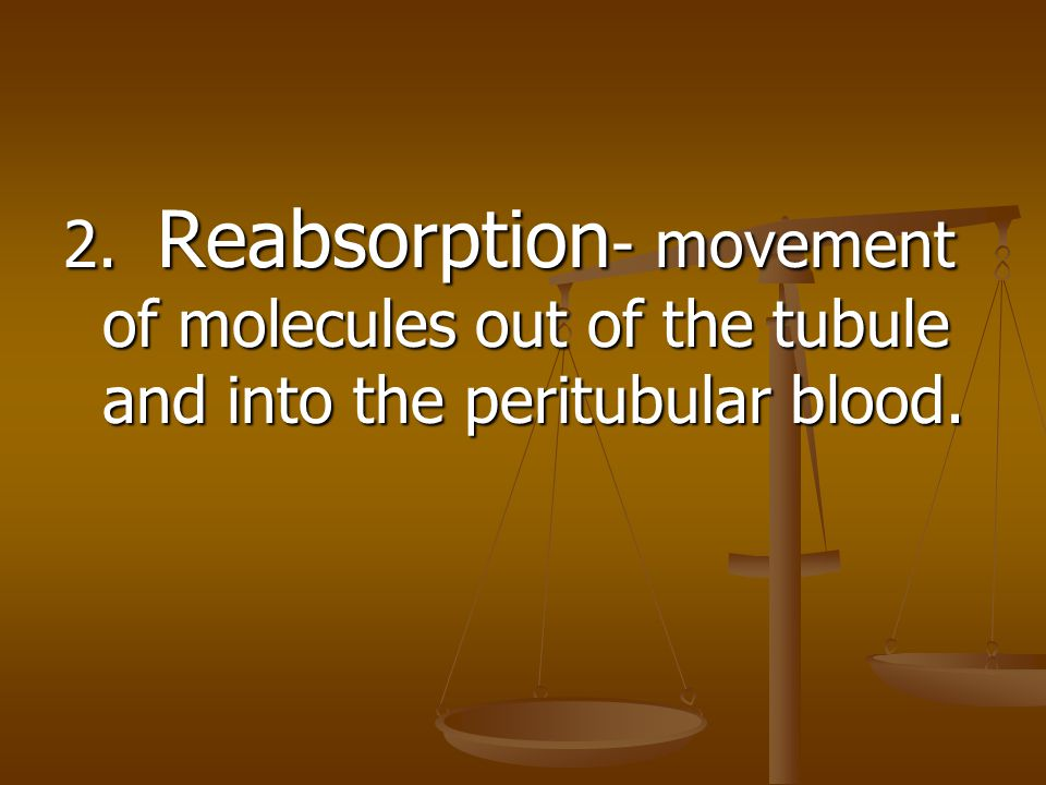 2. Reabsorption- movement of molecules out of the tubule and into the peritubular blood.