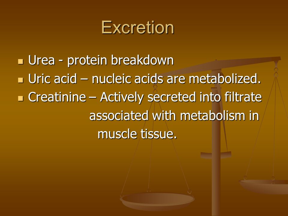 Excretion Urea - protein breakdown