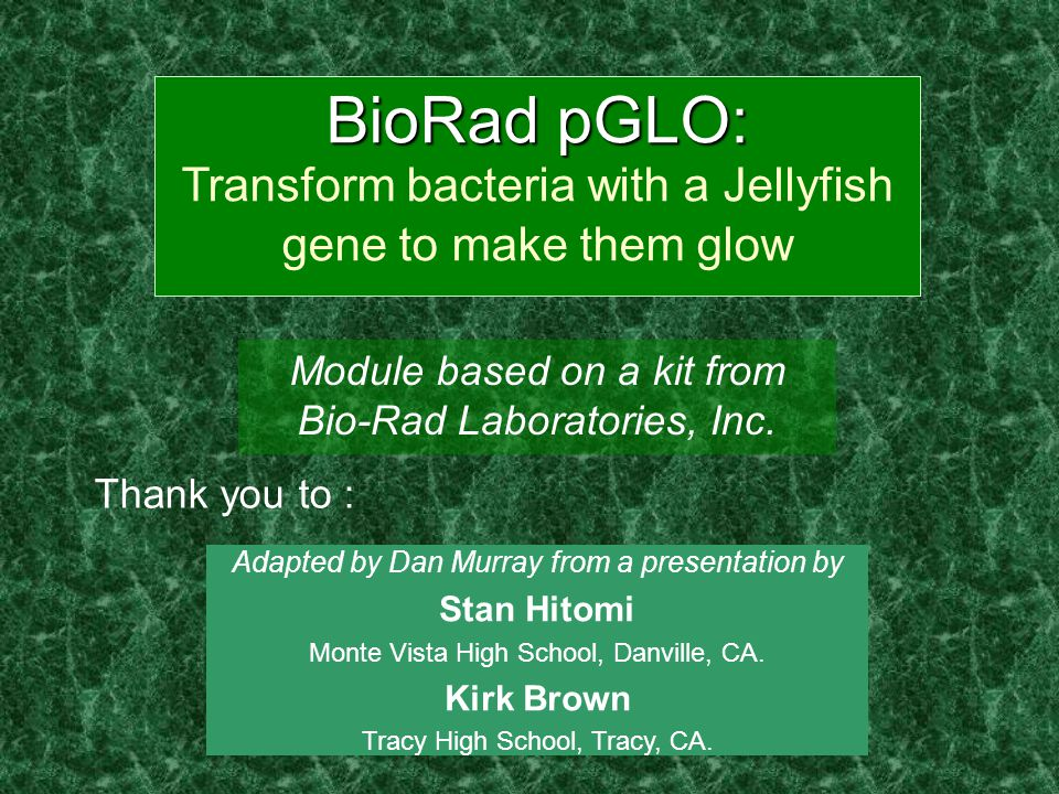 BioRad pGLO: Transform bacteria with a Jellyfish gene to make them glow