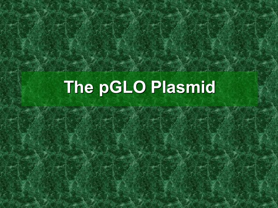 The pGLO Plasmid