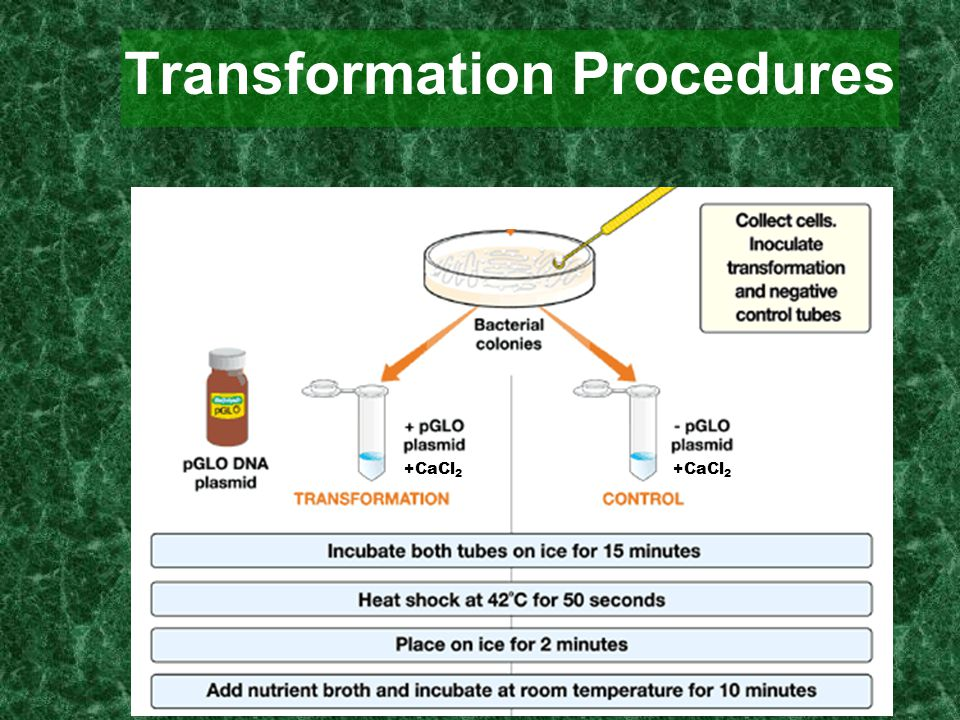 Transformation Procedures