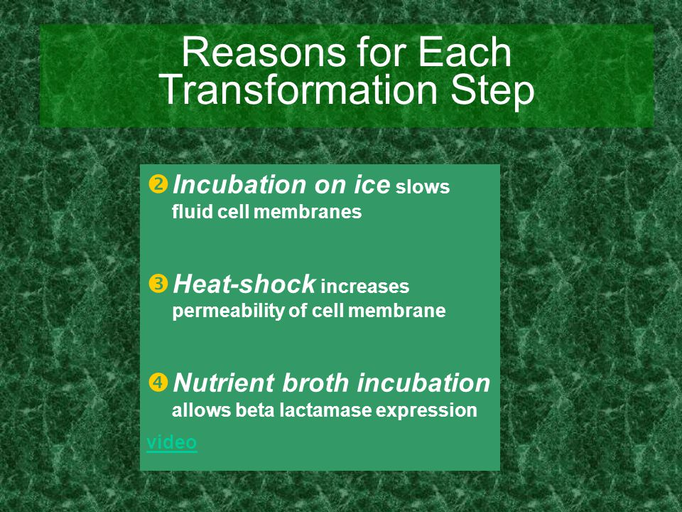 Reasons for Each Transformation Step