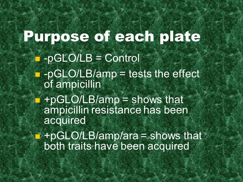 Purpose of each plate -pGLO/LB = Control