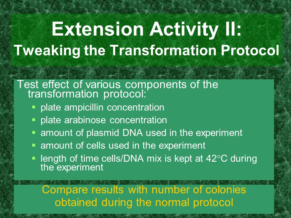 Extension Activity II: Tweaking the Transformation Protocol