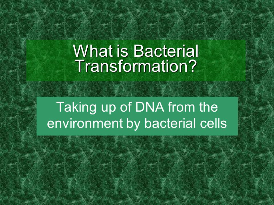 What is Bacterial Transformation