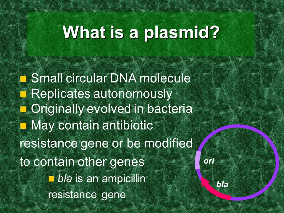 What is a plasmid Small circular DNA molecule Replicates autonomously