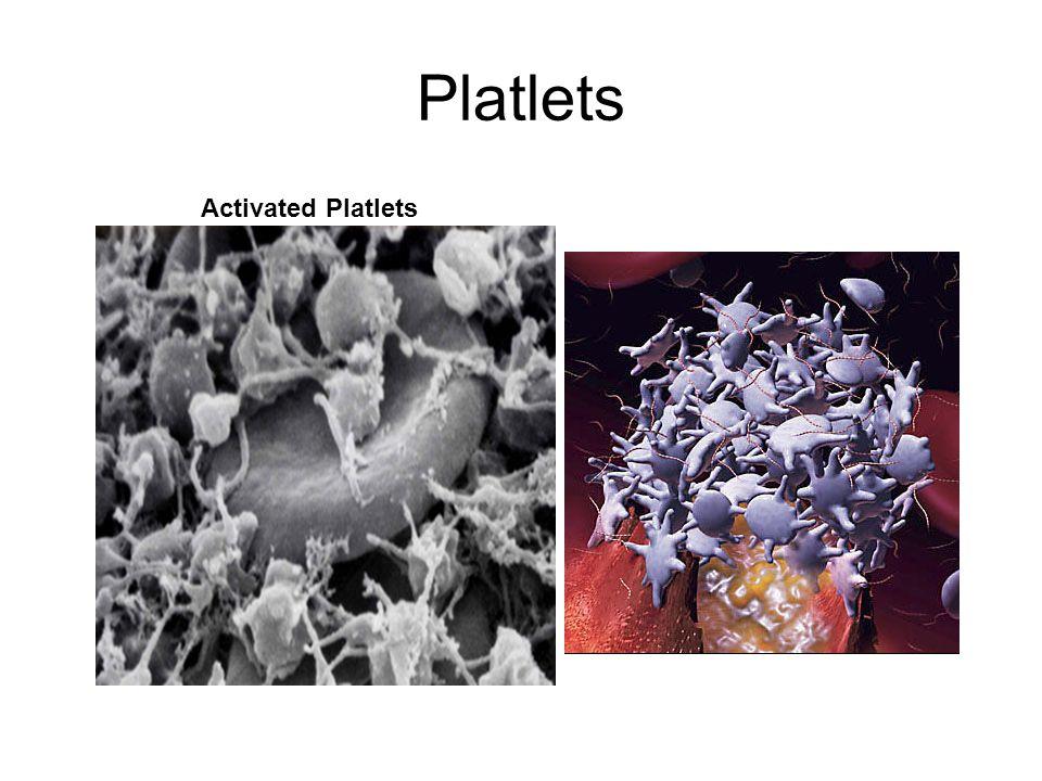 Platlets Activated Platlets