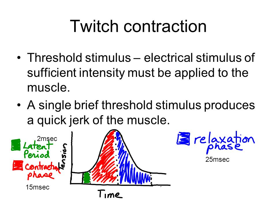 Twitch contraction Threshold stimulus – electrical stimulus of sufficient intensity must be applied to the muscle.