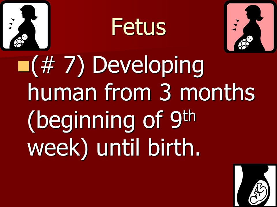 Fetus (# 7) Developing human from 3 months (beginning of 9th week) until birth.