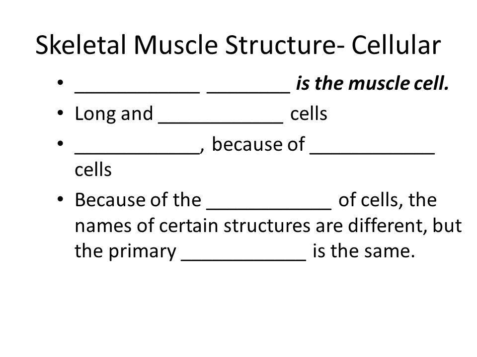 Skeletal Muscle Structure- Cellular