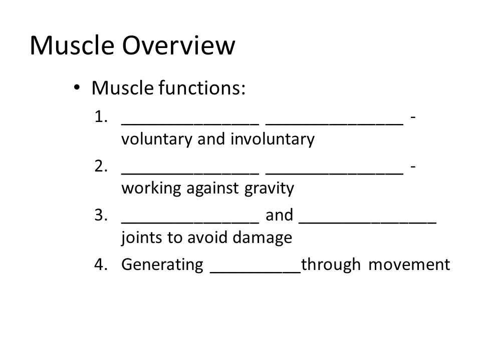 Muscle Overview Muscle functions: