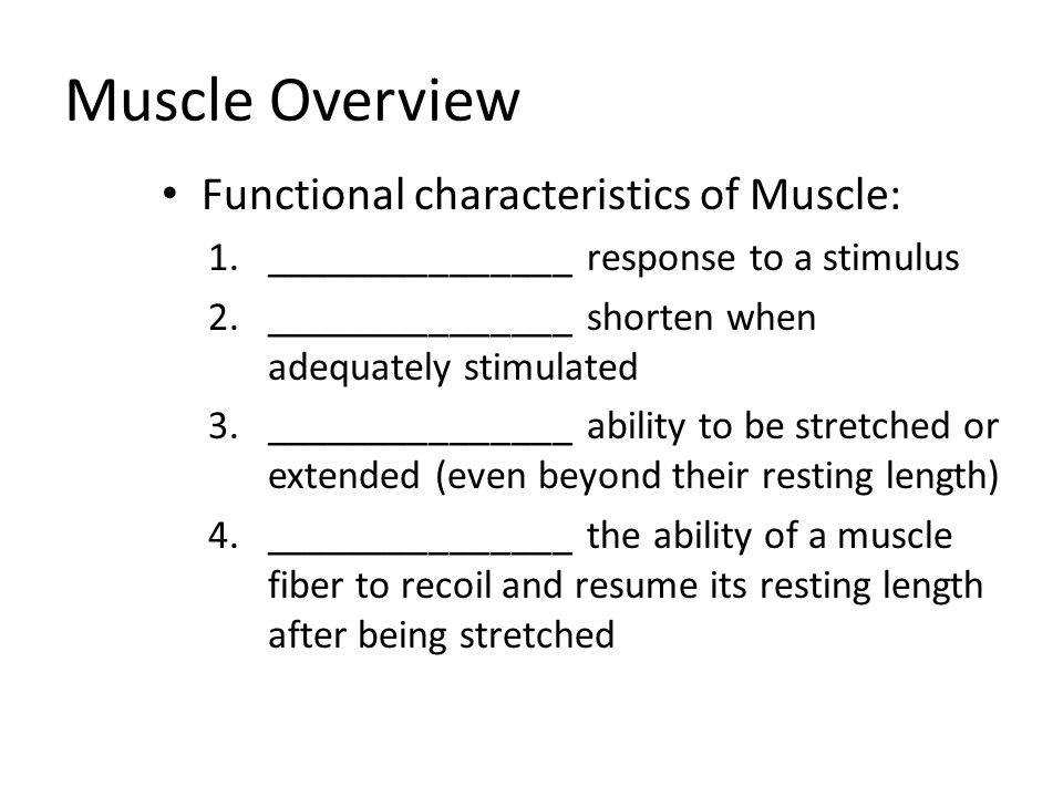 Muscle Overview Functional characteristics of Muscle: