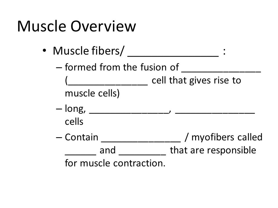 Muscle Overview Muscle fibers/ _______________ :