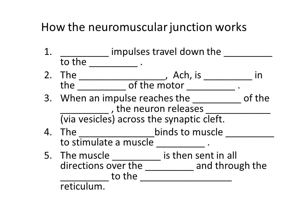 How the neuromuscular junction works