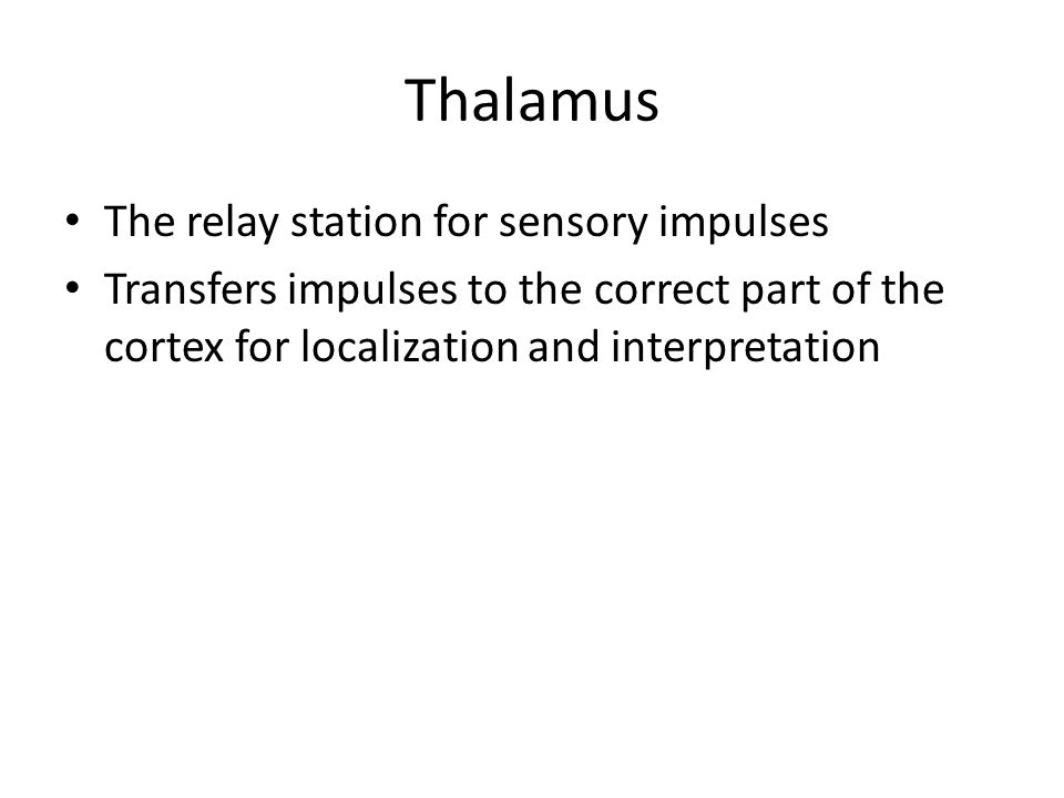 Thalamus The relay station for sensory impulses