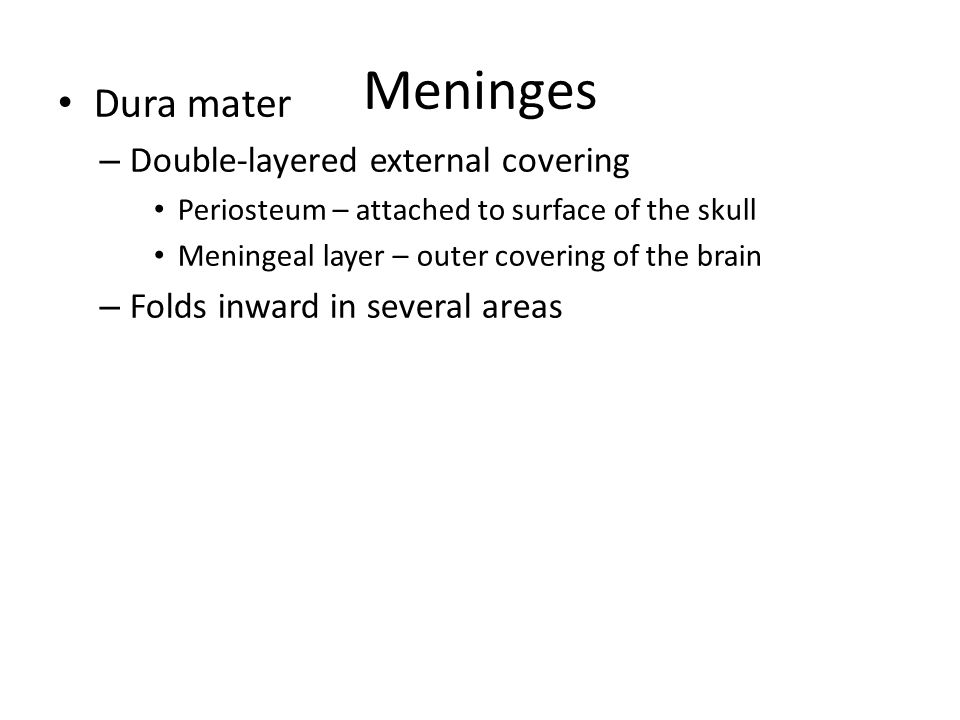 Meninges Dura mater Double-layered external covering