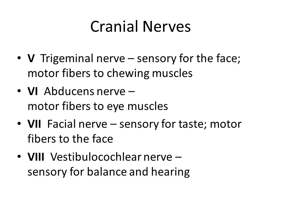Cranial Nerves V Trigeminal nerve – sensory for the face; motor fibers to chewing muscles. VI Abducens nerve – motor fibers to eye muscles.