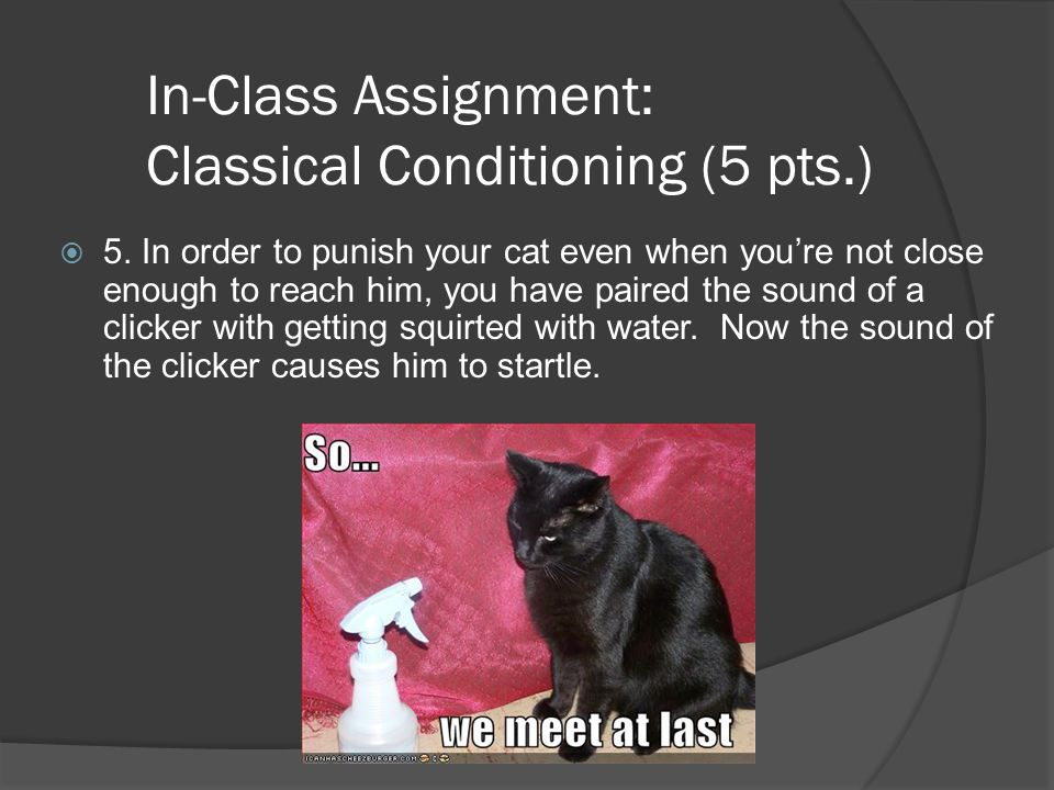 In-Class Assignment: Classical Conditioning (5 pts.)