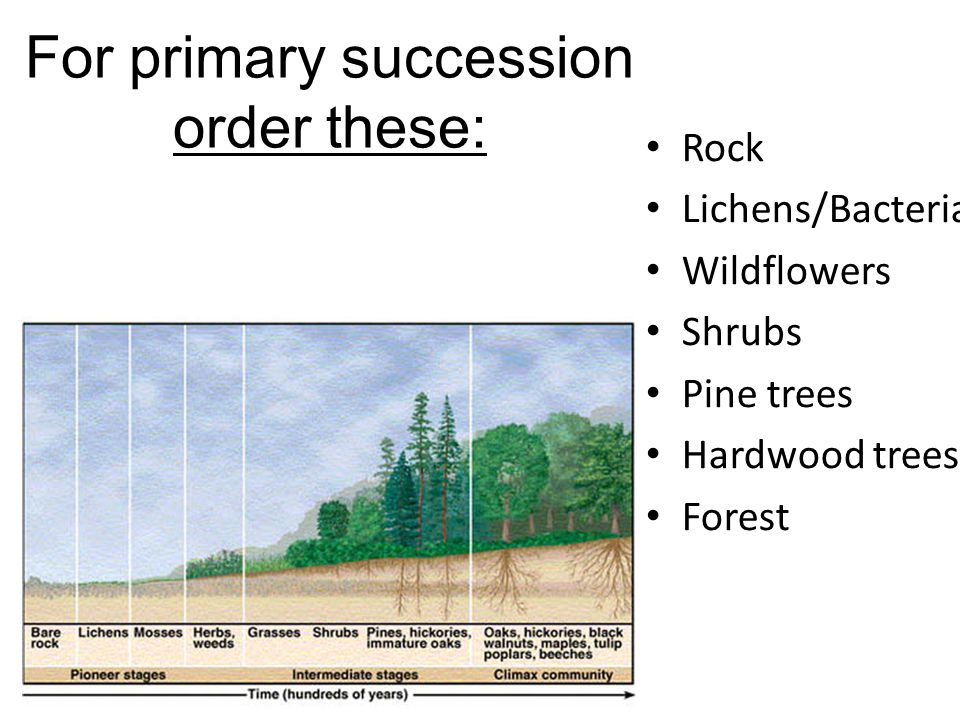 For primary succession order these: