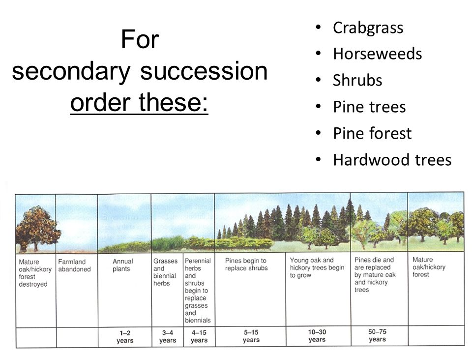 For secondary succession order these: