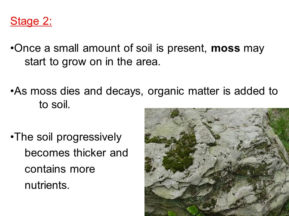 Stage 2: Once a small amount of soil is present, moss may. start to grow on in the area.