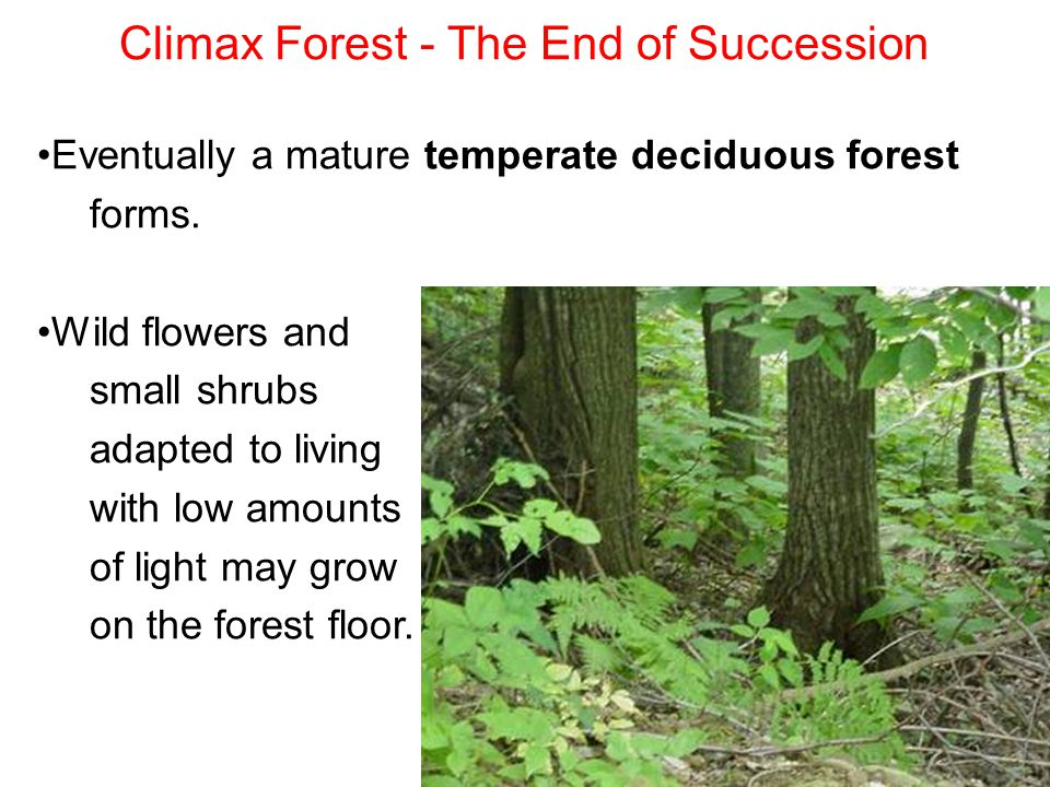 Climax Forest - The End of Succession