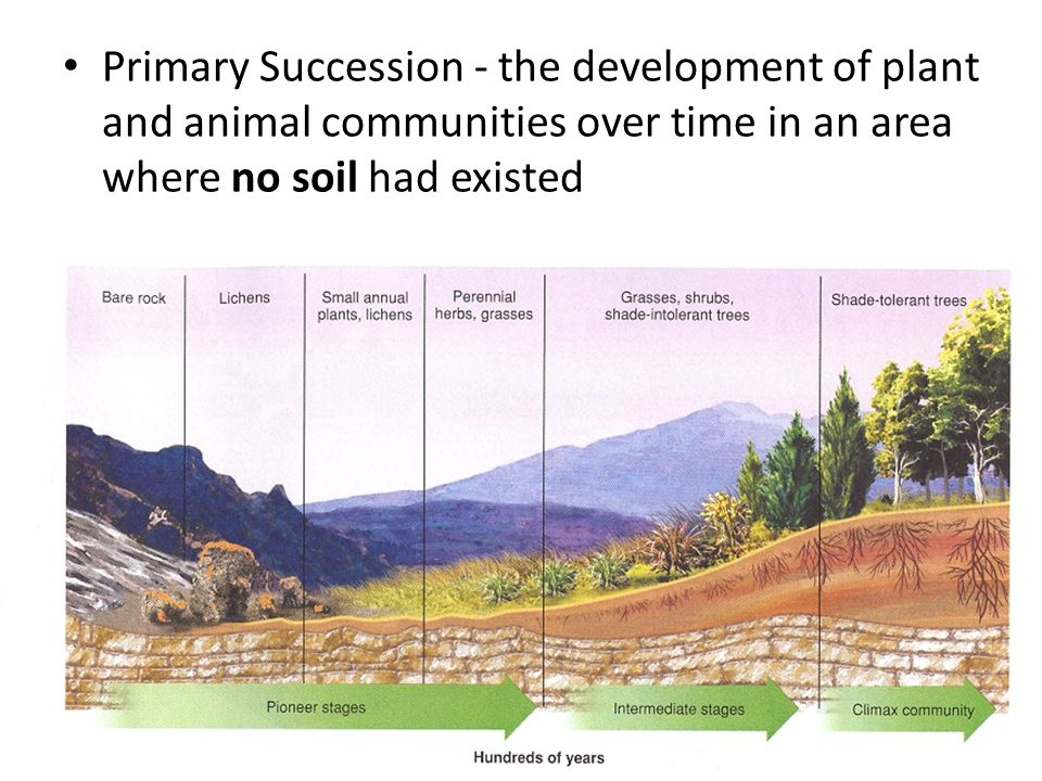 Primary Succession - the development of plant and animal communities over time in an area where no soil had existed