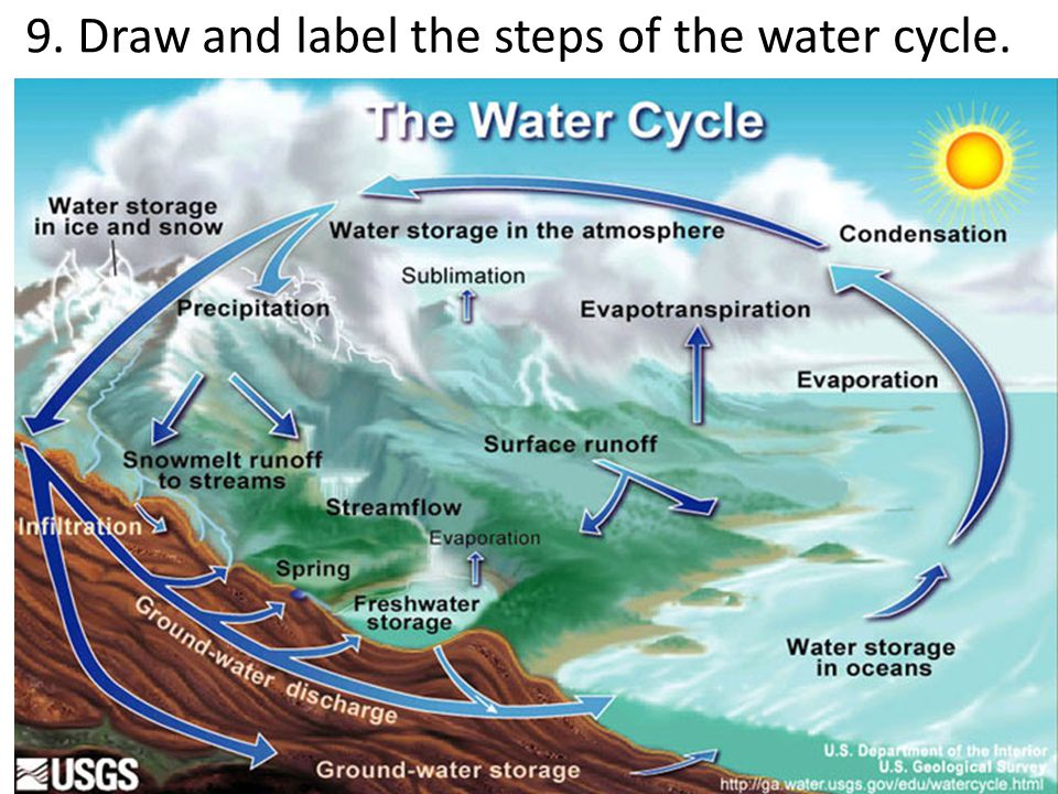 9. Draw and label the steps of the water cycle.