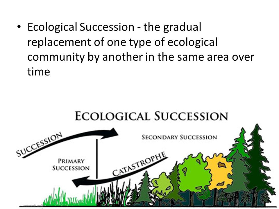Ecological Succession - the gradual replacement of one type of ecological community by another in the same area over time