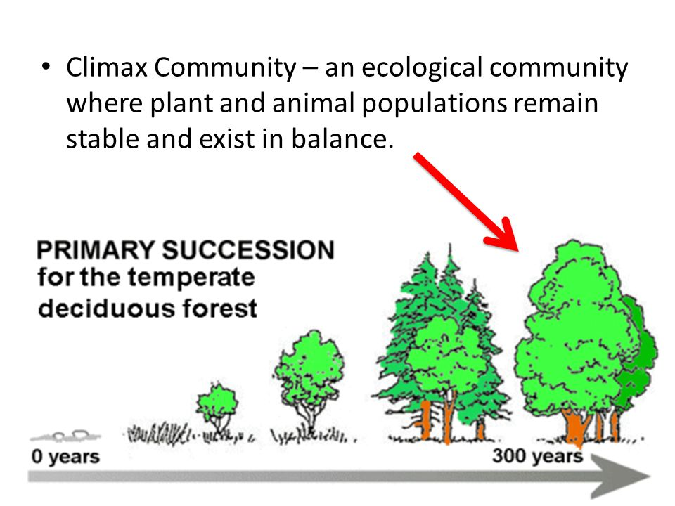 Climax Community – an ecological community where plant and animal populations remain stable and exist in balance.
