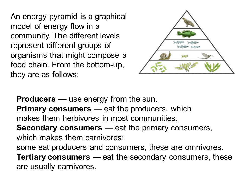 An energy pyramid is a graphical model of energy flow in a community