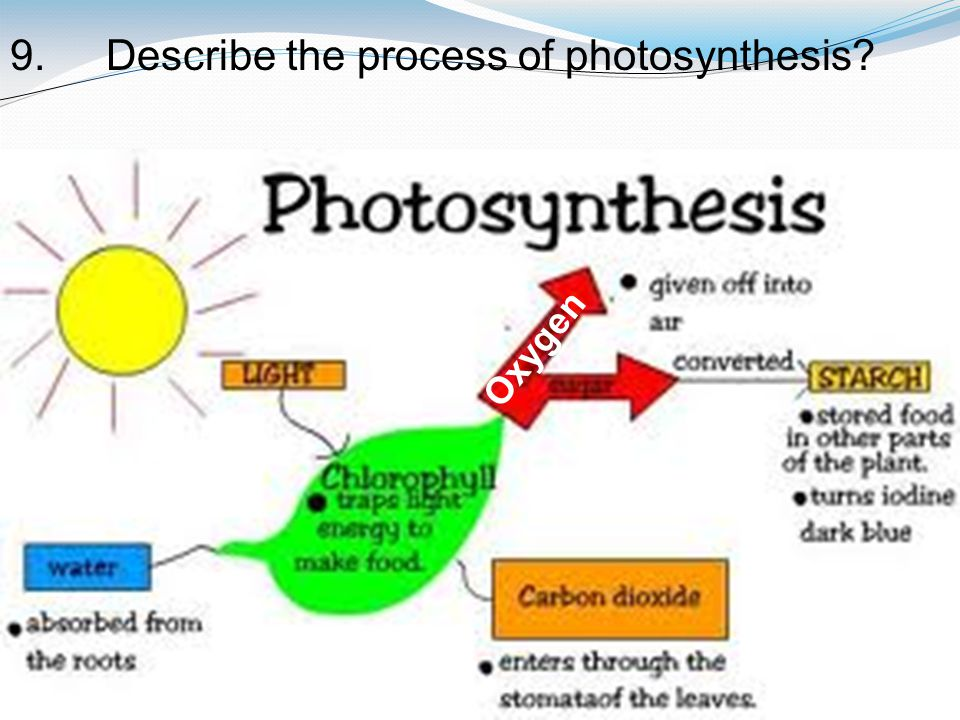 9. Describe the process of photosynthesis