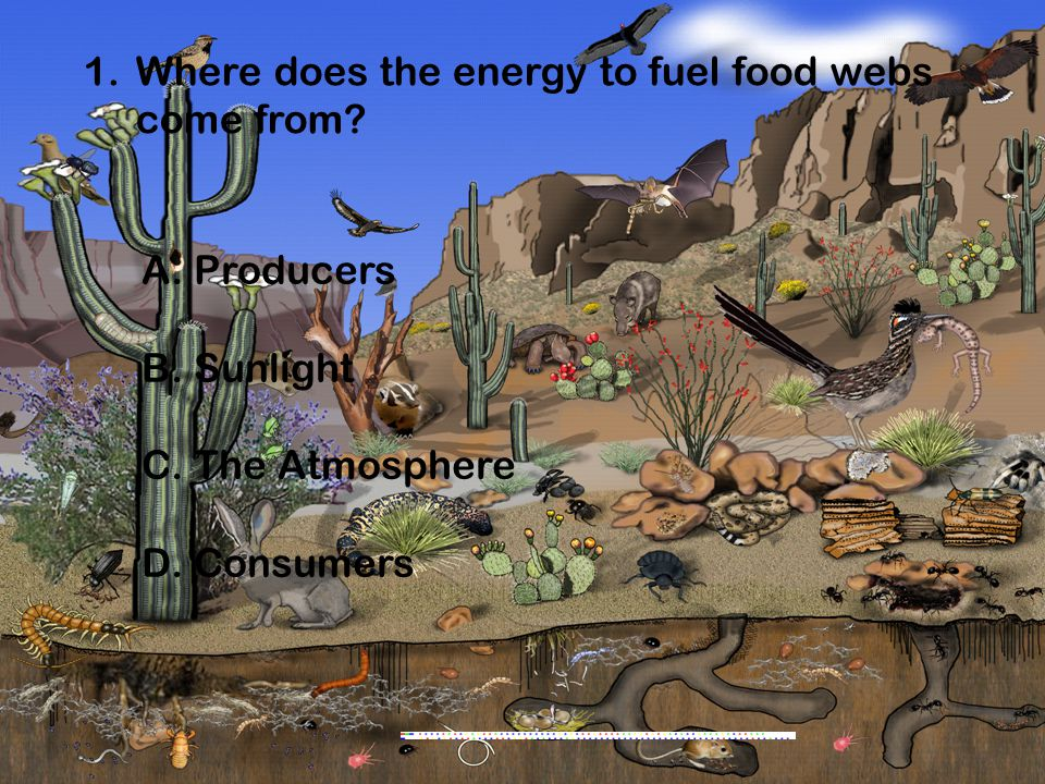 Where does the energy to fuel food webs