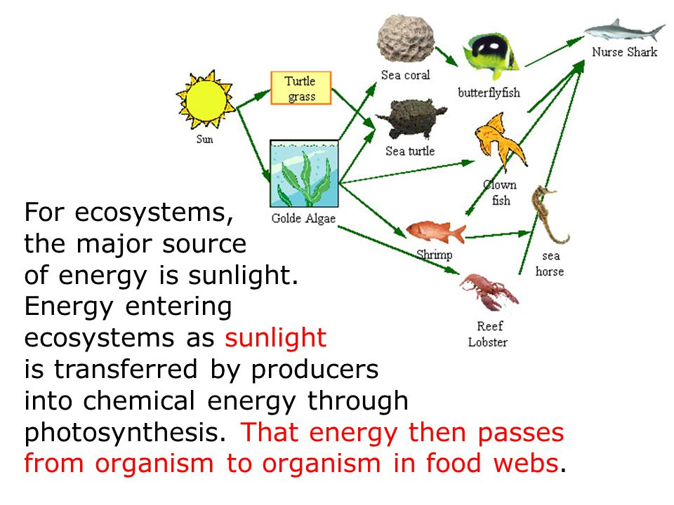 For ecosystems, the major source. of energy is sunlight. Energy entering. ecosystems as sunlight.