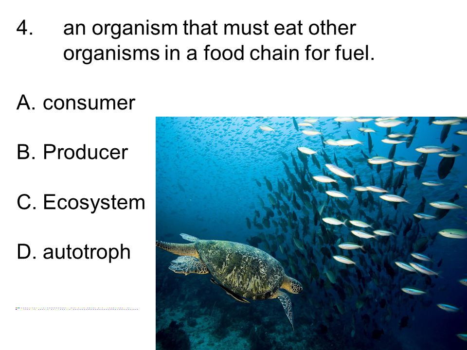 4. an organism that must eat other organisms in a food chain for fuel.