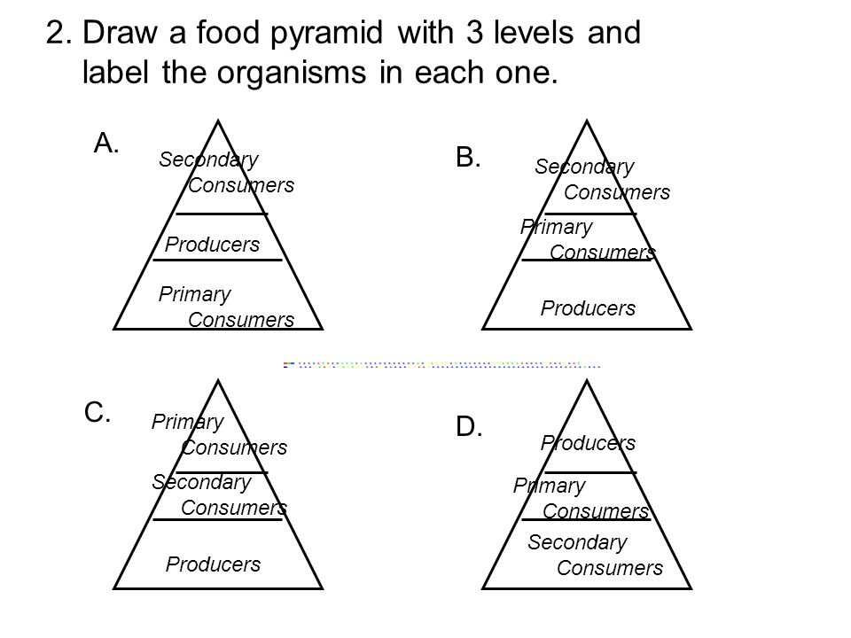 2. Draw a food pyramid with 3 levels and