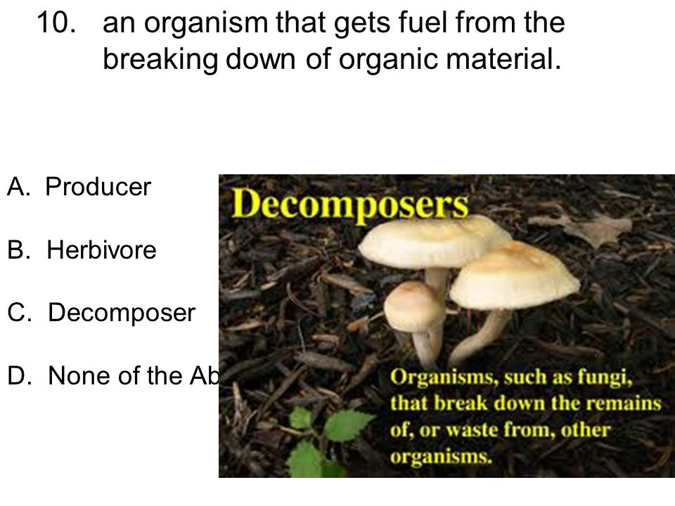 10. an organism that gets fuel from the