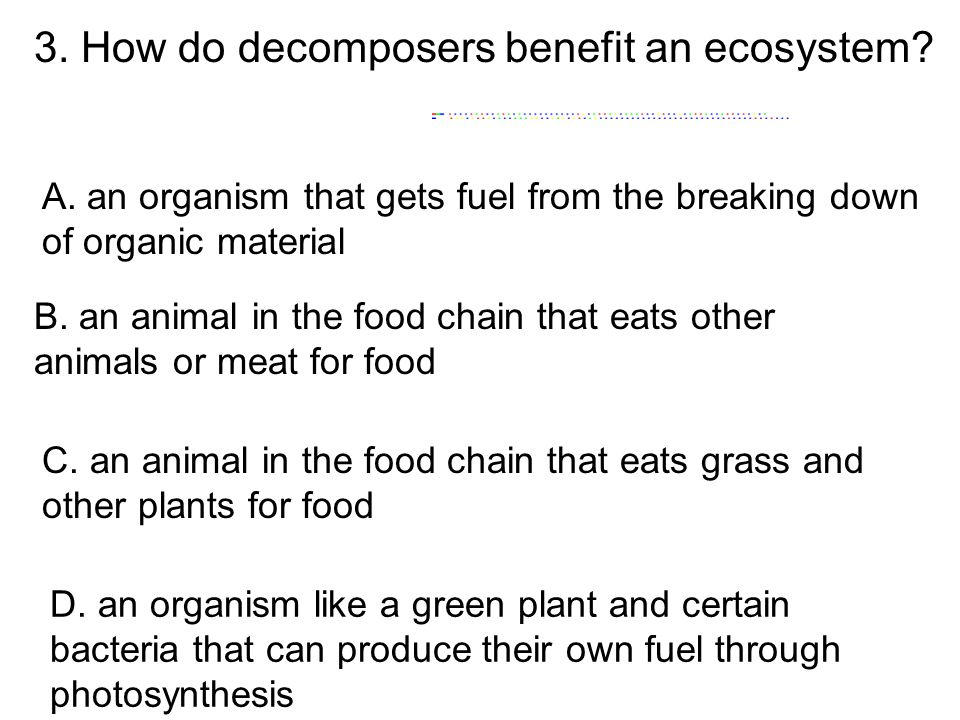 3. How do decomposers benefit an ecosystem