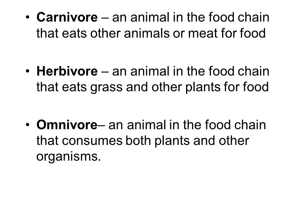 Carnivore – an animal in the food chain that eats other animals or meat for food