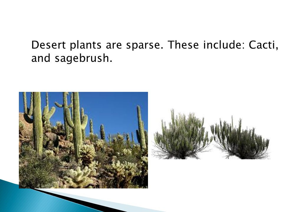 Desert plants are sparse. These include: Cacti, and sagebrush.